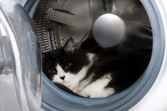 Cat in a laundry washer Royalty Free Stock Photo