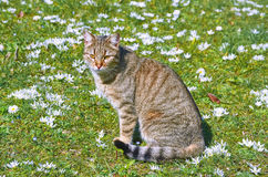 Cat on the Lawn Stock Photos