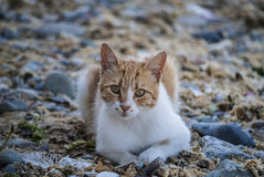 Cat lay on the beach Royalty Free Stock Photos