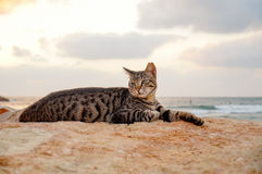 Cat lay on the beach Stock Photo