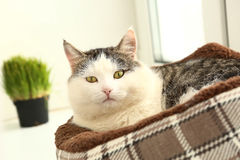 Cat lay in catbed close up portriat Stock Photography