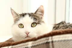 Cat lay in catbed close up portriat Royalty Free Stock Images