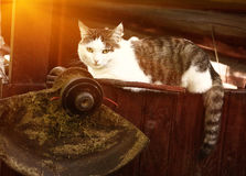 Cat lay on the country house wooden porch Stock Photos