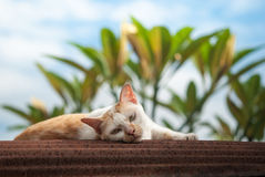 Cat lay down on rusted roof Royalty Free Stock Photos