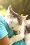 Cat lay on human breast close up outdoors photo Royalty Free Stock Photo