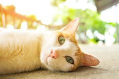 Cat laydown on cement floor royalty free stock photography