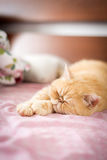 Cat laying on bed Royalty Free Stock Image