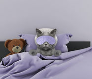 Cat laying in bed with toy Royalty Free Stock Photos
