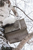 Cat laying on a birdhouse Stock Image