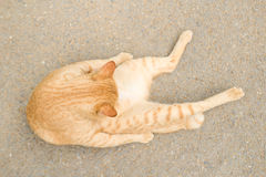 Cat laying down on floor Royalty Free Stock Photo