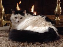 Cat laying by a fire Stock Images