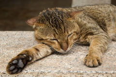 Cat laying on floor. Stock Photos