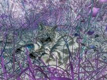 Inverse photographic filter of a cat laying on the grass in a field. stock image