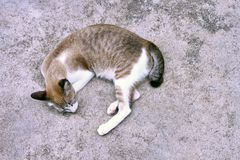 Cat Laying Ground Concrete Background royalty-vrije stock foto's