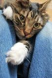Cat laying inbetween legs Stock Image