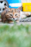 Cat laying on land Royalty Free Stock Image