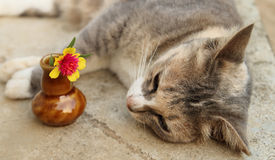 Cat laying near the vase of rose mos. Looks happiness Stock Image