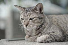 Cat Laying op de treden Stock Afbeeldingen