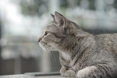 Cat Laying på trappan Arkivfoton