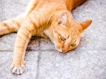 Cat laying Stock Photo