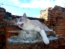 Cat laying on the ruins of the brick wall on the air. Stock Photography