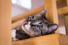 Cat laying on stairs Royalty Free Stock Photos