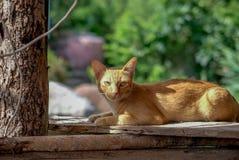 Cat Laying At Sunlight anaranjada fotografía de archivo libre de regalías