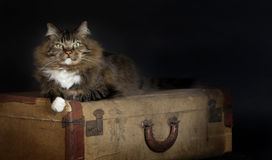 Cat Laying Vintage Suitcase Lizenzfreie Stockbilder