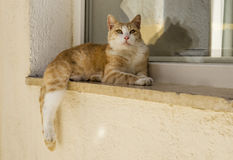 Cat laying on a window sill. Cat taking a rest on a window sill Stock Photography