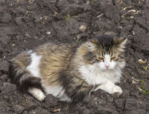 Cat Lays on Dirt Royalty Free Stock Photos