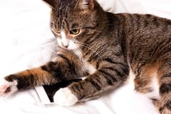 Cat lays and looks into the phone. Smartphone royalty free stock photos