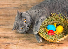Cat lays near basket with colored eggs Stock Images