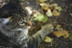 Cat lays outdoors Royalty Free Stock Photography