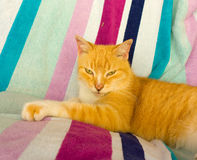 A cat lazing on a beach towel in the tropics Stock Photography