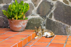 A cat lazing in the tropical sun Royalty Free Stock Photography