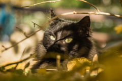 Cat in the leafs Royalty Free Stock Image
