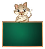 A cat leaning above the blackboard Stock Photo