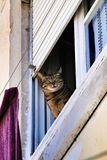 Cat leaning out of a window in Lisbon royalty free stock photos