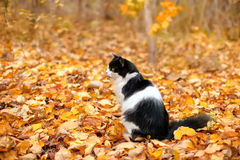 Cat on the leaves. Cat sitting on the leaves in the forest royalty free stock image