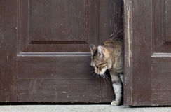 Cat leaves home, Stock Photos