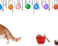 Cat is leaving. When the cat is leaving .mice having a party Royalty Free Stock Image