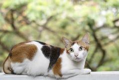 Cat on ledge Stock Photo