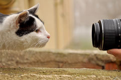 Cat and lens Royalty Free Stock Images