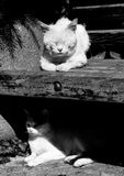 Cat levels. Two cats in different levels of a bench royalty free stock photo