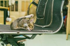Cat Licking Chair Royalty Free Stock Images