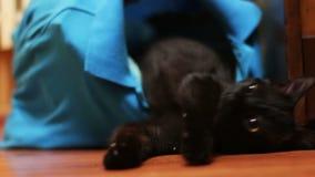 Cat Licking e gioco neri video d archivio