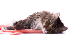 Cat licking its fur and lying on bath towel. The cat is licking its fur and is lying  on bath towel. Pussy cat is lying on the peach-coloured towel. Isolated on Royalty Free Stock Image