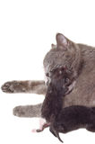 Cat licks newborn kitten. Cat licks gently hugged her newborn kitten Royalty Free Stock Images