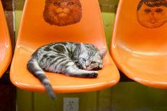 Cat lie on the chair Royalty Free Stock Photo