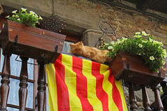 The cat lies on a balcony with white petunias and Catalan flag in Rupit. Catalonia, Spain Stock Photos